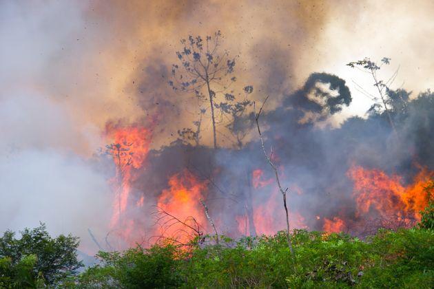 불타고 있는 아마존