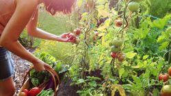 Anche le piante soffrono ed esprimono dolore