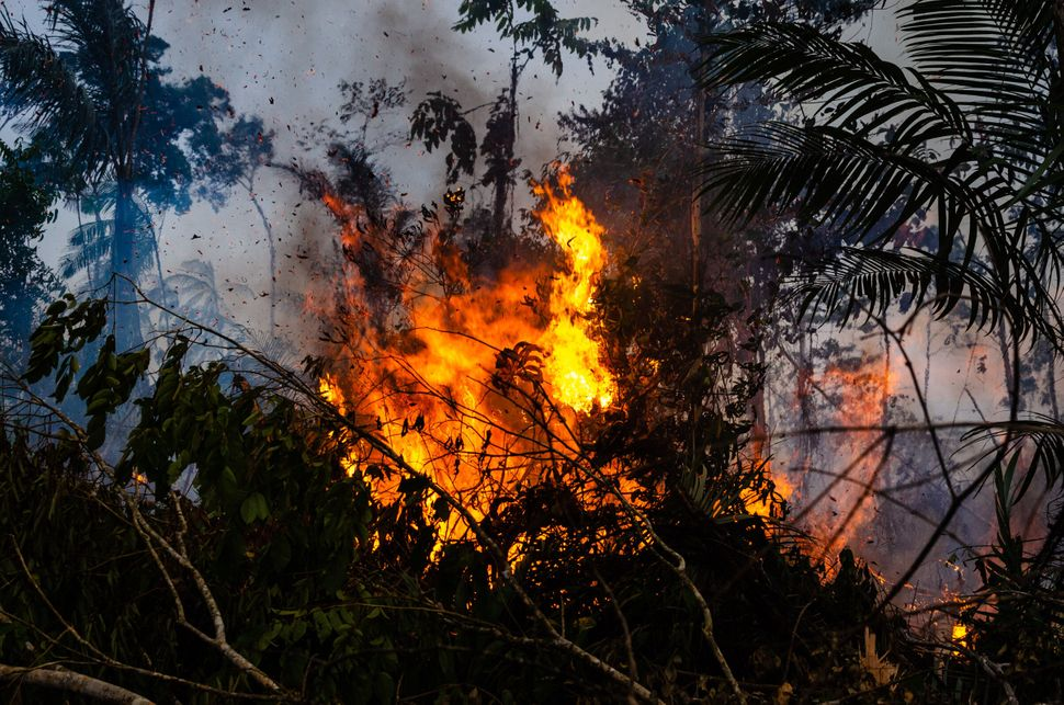 A fire in the Amazon rainforest in rural Novo Progresso, Para, Brazil, in August 2019. August saw the highest rates of forest