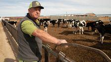 Sind 'Forever Chemikalien In Unserer Milch? Niemand Hat Wirklich Überprüfen.