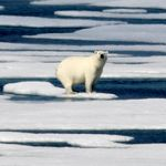 Arctic In Dire Condition As Climate Change Ravages Long-Frozen Region, Report