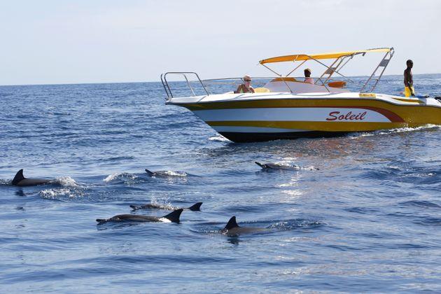 Océan Indien, Ile Maurice, sur un bateau, nager avec les dauphins dans l'océan pres du...
