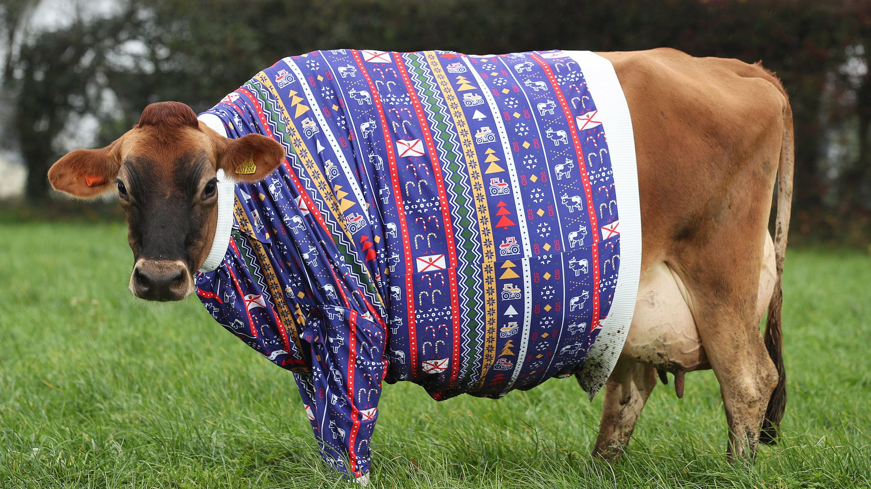 These Animals In Winter Knits Are What We All Need Right Now