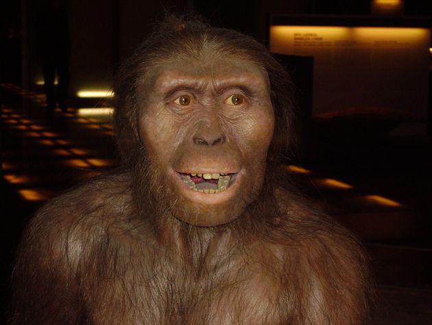 Homo sapiens n'est pas le seul animal à être anatomiquement capable de parler. Des singes...