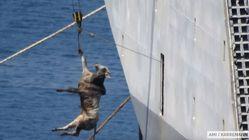 Esta campanha busca acabar com o 'terror' da exportação de animais vivos para