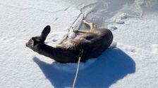 代理ラッソ鹿後の下落を通じてアイス-上池