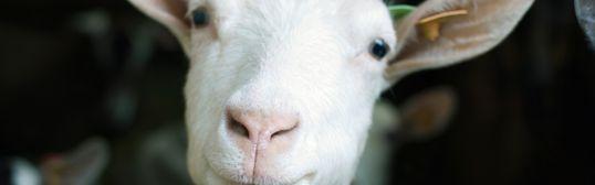 16살 소녀가 쌈짓돈을 모아 염소를 사야만 했던