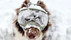 그 누구보다도 겨울을 즐기는 강아지의 위엄 (사진,