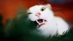 Γάτες εν δράσει: Δείτε τι συμβαίνει στα Χριστουγεννιάτικα δέντρα των ιδιοκτητών