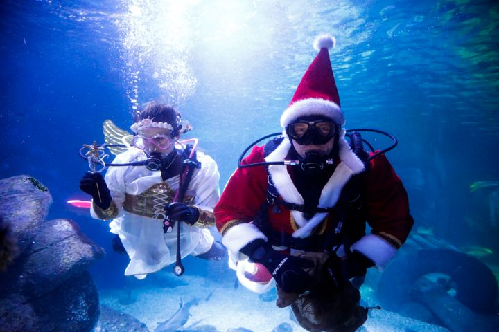 Diver dressed as an angel and as a Santa Claus dive inside a aquarium to feed fishes during a media event at the Seal Life aq