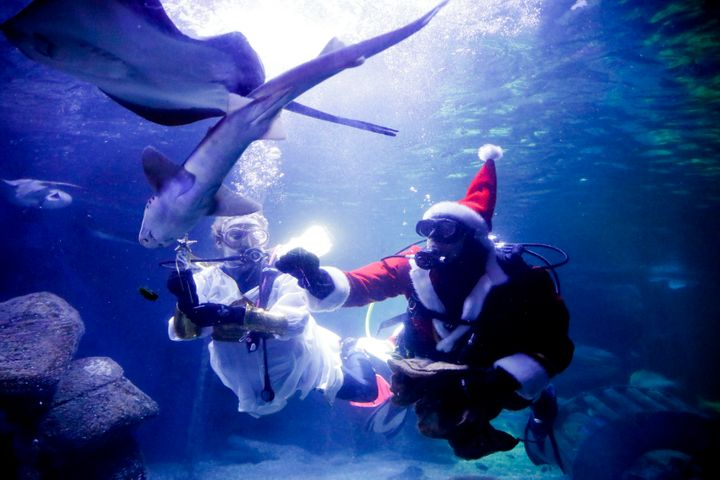 Diver dressed as an angel and as a Santa Claus feed fishes during a Christmas event at the Seal Life aquarium in Berlin, Thur