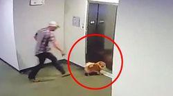 강아지 목줄이 승강기 문에 낀 위험천만한 상황에 벌어진 일