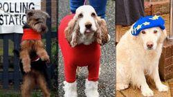 イギリス総選挙を行方を見守る「投票所の犬」。飼い主を待つワンちゃんの写真に癒される(画像集)