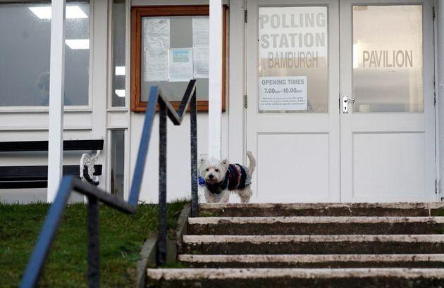 投票所の犬