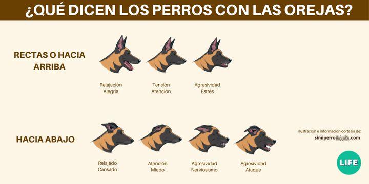 La posición de las orejas de los perros y su significado.