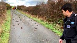 Ces centaines d'oiseaux morts au Pays de Galles vont vous rappeler une scène de