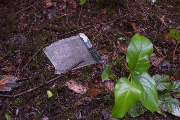 What appears to be debris from a plane is shown on the forest floor in dense woods near the scene of...