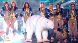 Le déhanché de l'ours blanc sur la scène de Miss France a amusé tout le