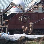 중국 폭력조직이 농가에 드론을 띄워 돼지열병을 퍼뜨리고