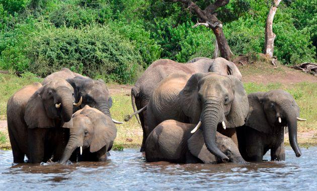 Μποτσουάνα: Ανάκληση κυνηγετικών αδειών σε δύο άντρες που σκότωσαν