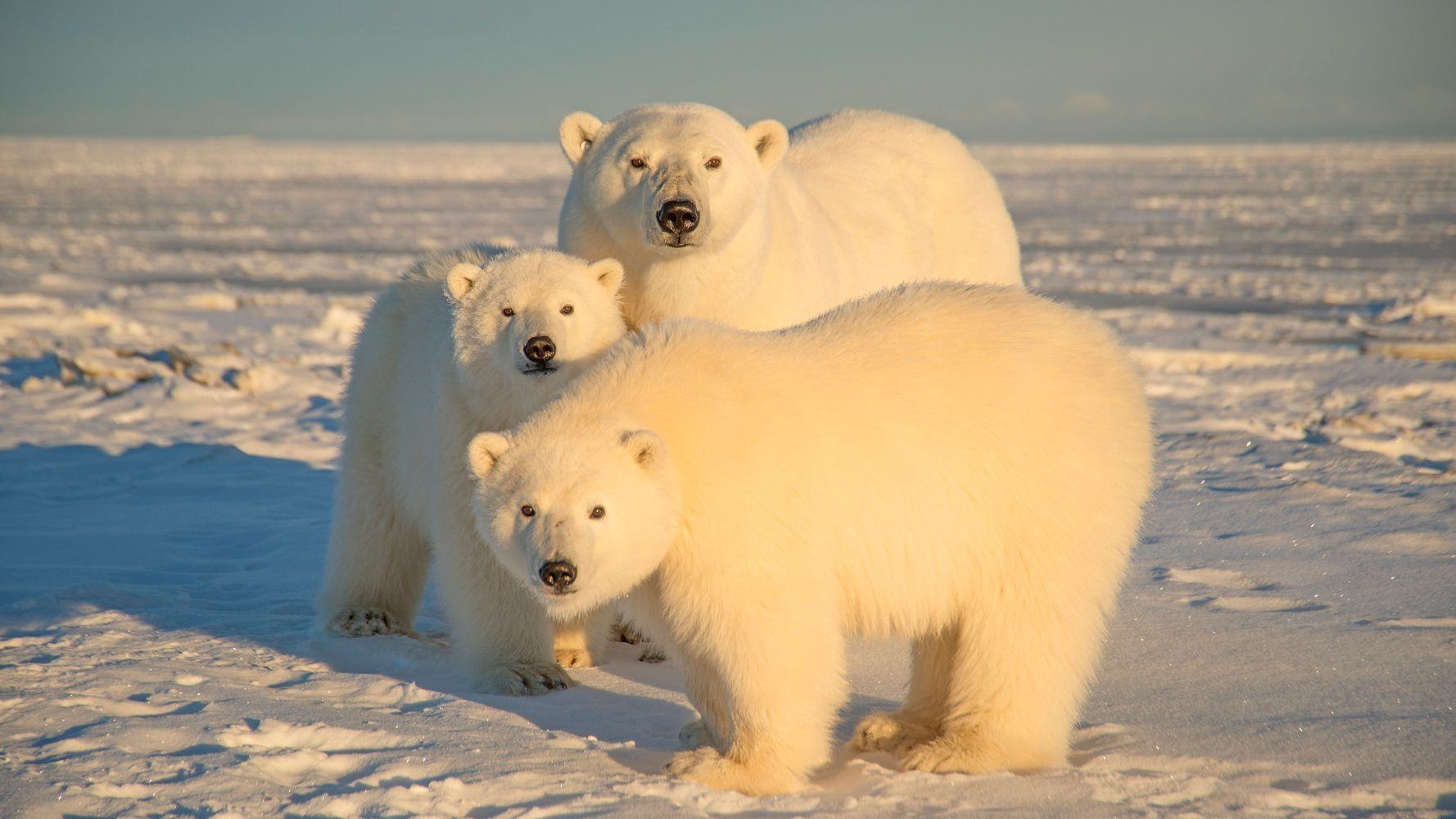 Goldman Sachs Is First Major U.S. Bank To Reject Financing Oil Drilling In The Arctic