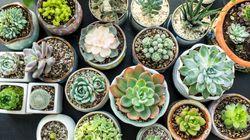 Desk Plants Can Improve Your
