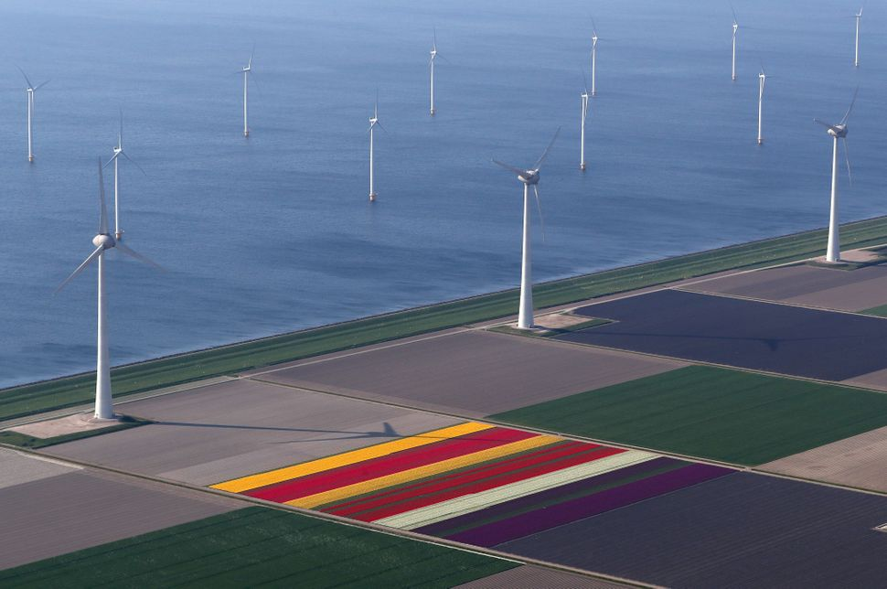 An aerial view of tulip fields and windmills near the city of Creil, Netherlands.