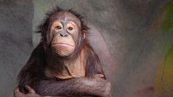 Ιταλικό ποδόσφαιρο: Τεράστιες αντιδράσεις μετά την καμπάνια με μαϊμούδες κατά του