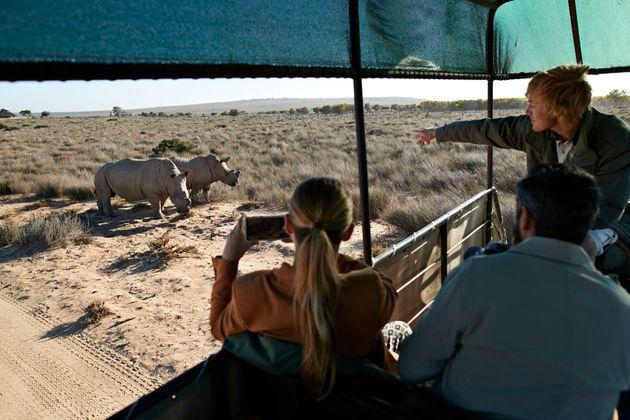 Safari por