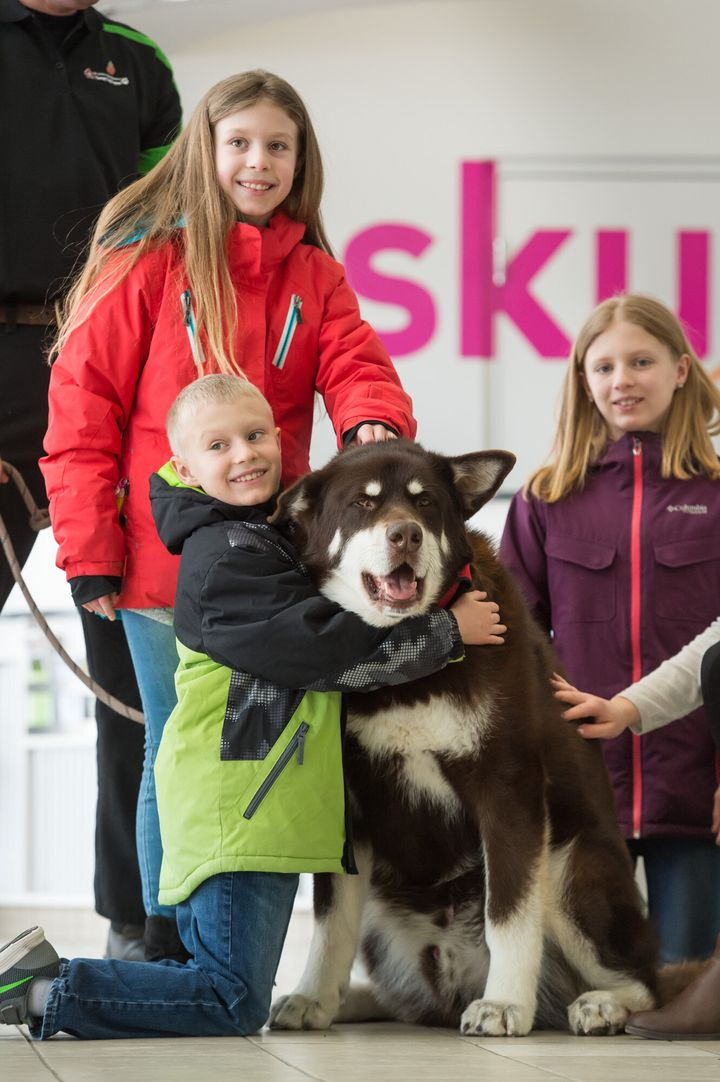 Ralf, an Alaskan malamute, with passengers at the Saskatoon International Airport.