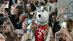 Legal Pot, Toronto Raptors Inspire Canada's Top Pet