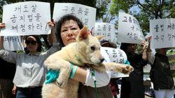 전기로 개를 도살하는 게 '동물보호법 위반'이라는 판결이 최초로