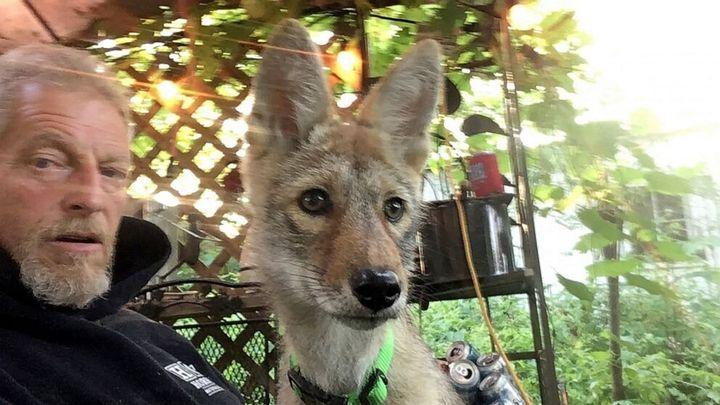 Matt Stokes and his pet coyote