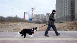 「35センチ以上の犬は禁止、自身で処置しろ」北京市の通知が話題に。その真相は?