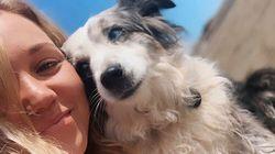Σαν Φρανσίσκο: Προσφέρει αμοιβή 7.000 δολαρίων σε όποιον βρει τον σκύλο