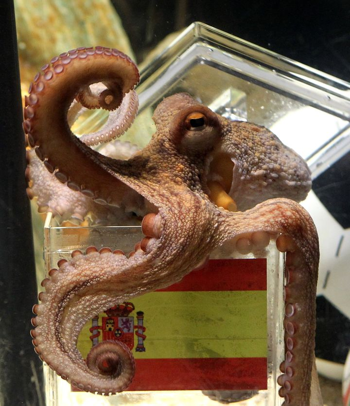 Paul, the World Cup predicting octopus.