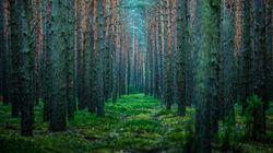 Το αρχαιότερο δάσος του κόσμου εντοπίστηκε στη Νέα