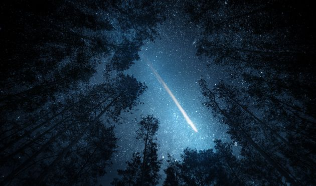 Beautiful night sky, the Milky Way, meteor and the trees. Elements of this image furnished by