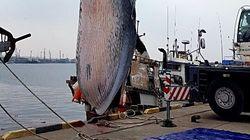 제주에서 건물 3층 크기 대형고래 사체가