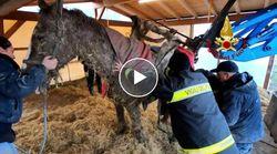 Il cavallo resta intrappolato nel fango. Il salvataggio notturno dei vigili del fuoco