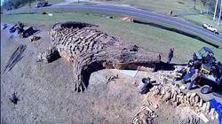 Λουιζιάνα: Ενας αλιγάτορας 24 μέτρων στην πυρά την ημέρα των