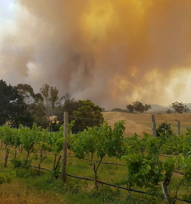 Wine industry representatives say the fires have potentially wiped out a third of wine