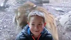 Tiger 'Attacks' Young Boy At Zoo, Twitter Followers