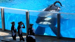SeaWorld Orlando To End Controversial Orca Show In