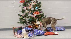 직접 성탄절 선물을 고르는 개의 꼬리는 누구보다 빠르게 움직인다