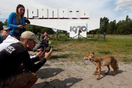 Μια αλεπού φωτογραφίζεται...