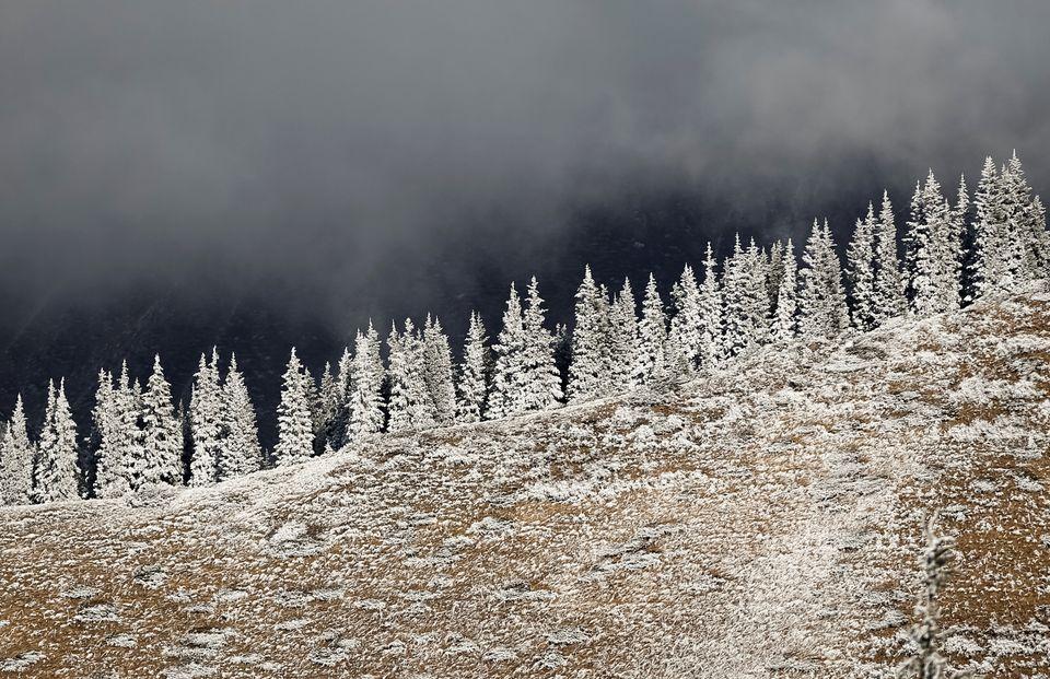 Τα δάση που καλύπτονται...