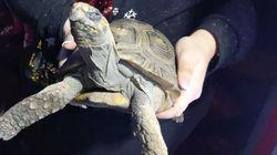Ο χελώνος που έμεινε μόνος στο σπίτι τα Χριστούγεννα - και του έβαλε