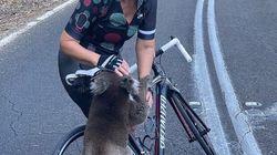 40도 폭염 속, 코알라가 자전거에 달린 물병으로