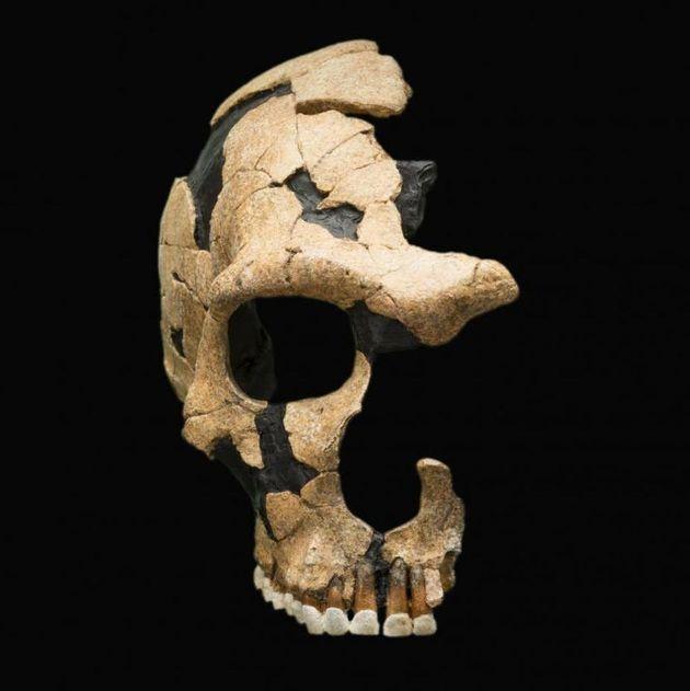 Un cráneo neandertal muestra traumatismos craneales, evidencia de antigua